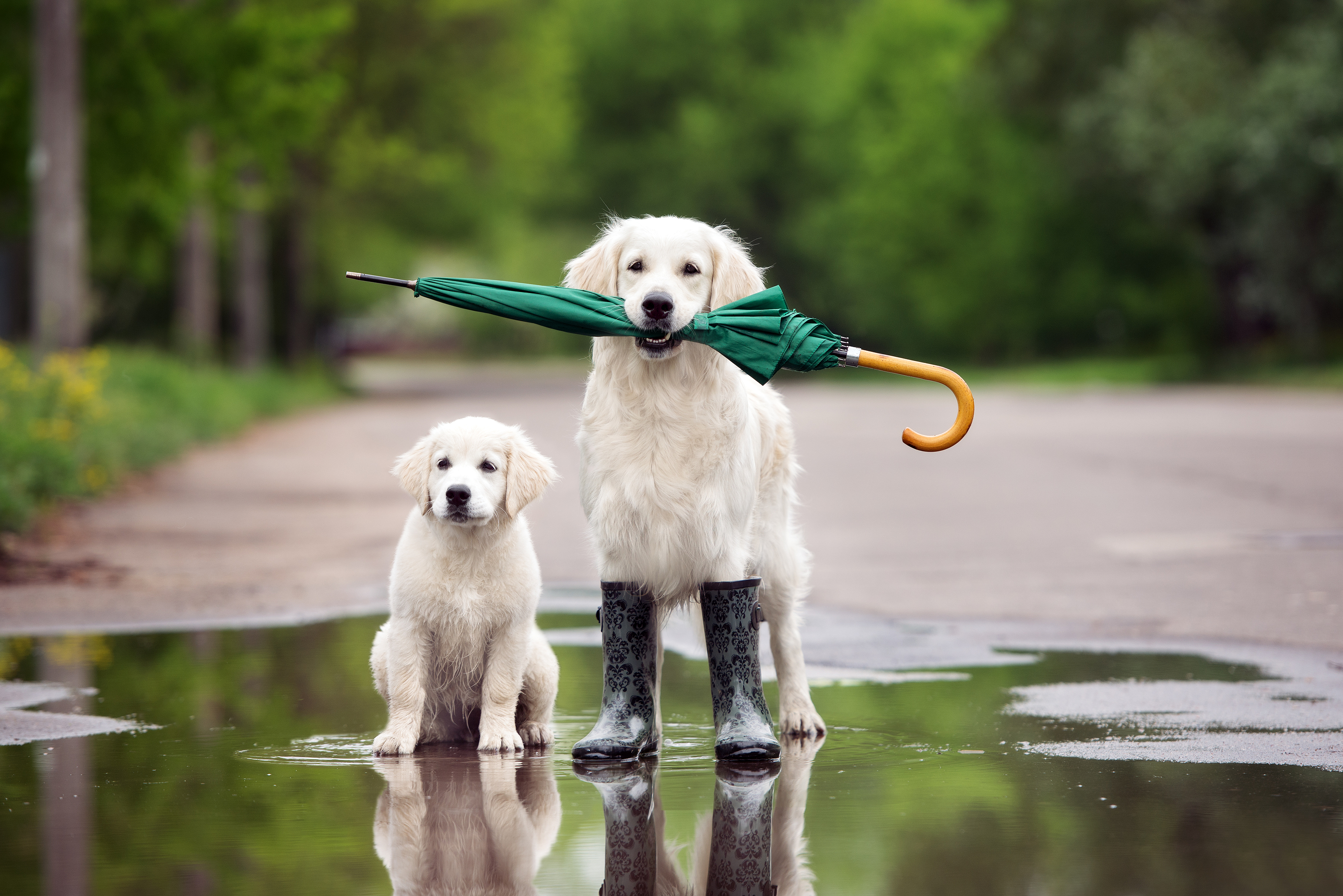 dogs umbrella